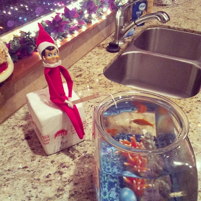 Gone fishing. This was a couple years ago. RIP to our goldfish Rudolph and Tarzan.